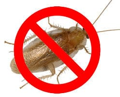 pest control eugene good earth no cockroaches pest control eugene protect your house from insect invasion Аone exterminators