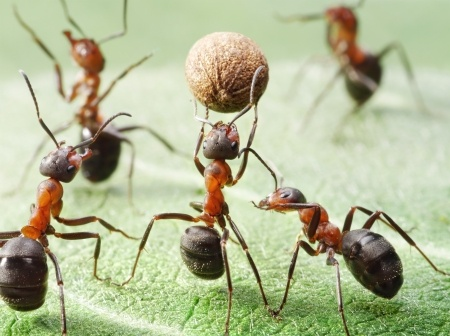 Different Types of Ants: Common Species that Can Invade Your Home - А ...