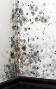 Is Your Southern Oregon Home at Risk for Mold?