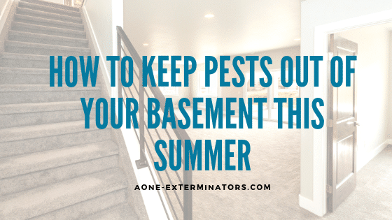 How to Keep Pests Out of Your Basement this Summer